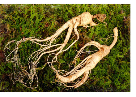 ginseng as erectile dysfunction herbs